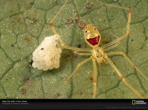 WTF?  Are you kidding me?  A happy face spider?