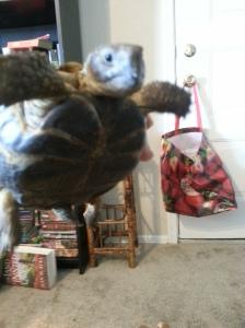 Darwin, my new Russian tortoise
