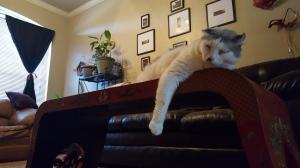 judgement cat